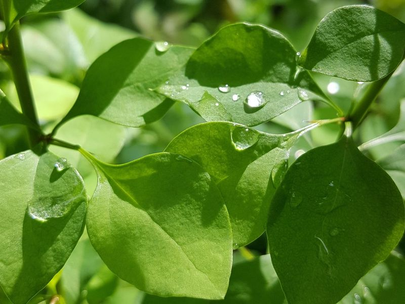 Macro Water Drops Leaf Nature Green Color Close-up Outdoors Plant Beauty In Nature EyeEmNewHere