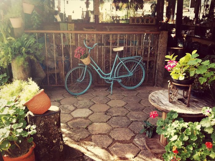 Bike Flower Rustic