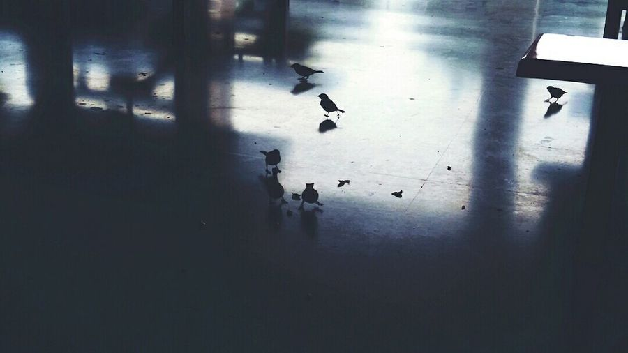 And these days they can nowhere be seen! Sparrows Mycollege Canteen Chirpingbirds