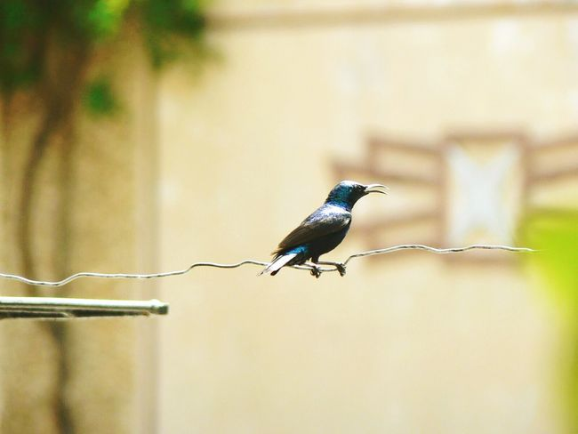 Bluebird Blue Kingfisher EyeEm Best Shots EyeEm Best Edits EyeEmBestPics EyeEm Gallery EyeEm Bird Lover  Birds_collection Birds Of EyeEm  Birdporn The Bird Shot