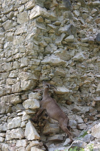 Animal Wildlife Fort Castle Capricorn Backgrounds Full Frame Beach High Angle View Close-up Stone - Object Rough