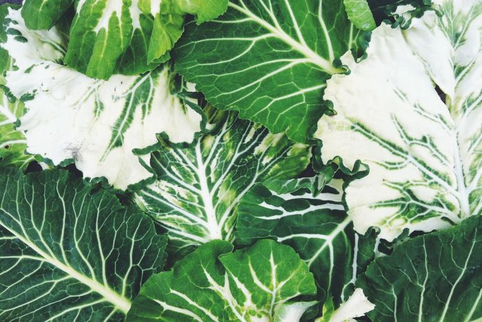 Garden Healthy Eating Green Color Leaf Growth Plant Nature Close-up No People Freshness Day Fragility Veins In Leaves Pattern Map Freshness Outdoors Green Color Nature Full Frame Collard Greens Beauty In Nature Growth Beauty In Nature