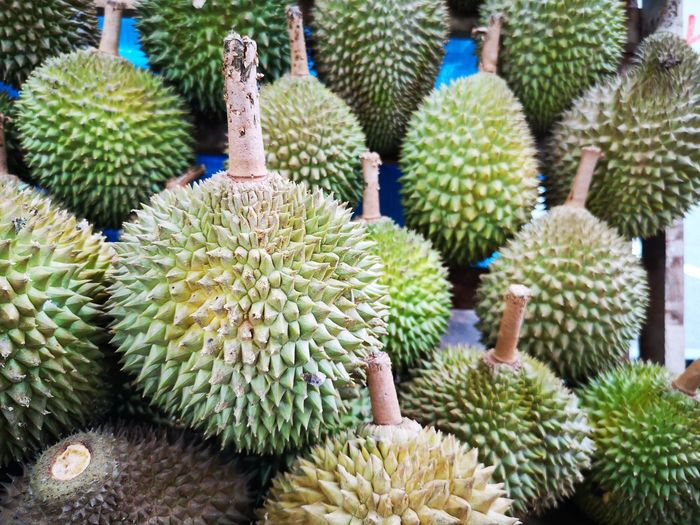 Durian Durian Fruit Durian Season Durians Backgrounds Full Frame Cactus Spiked Fruit Thorn Close-up Plant Barrel Cactus Needle - Plant Part Pine Cone Pinaceae Pine Tree Succulent Plant Aloe Vera Plant Botanical Garden Prickly Pear Cactus Tropical Flower Sharp Spiky Saguaro Cactus Groceries Tropical Fruit The Mobile Photographer - 2019 EyeEm Awards The Foodie - 2019 EyeEm Awards