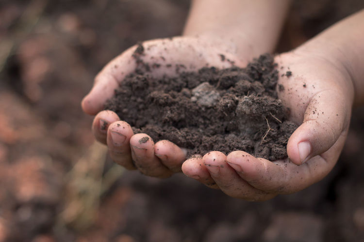Ecology concept. Hands holding earth. Dirt Human Hand Human Body Part Hands Cupped Hand One Person Dirty Holding Nature Land Growth Day Focus On Foreground Close-up Gardening Environment Mud Beginnings Child Messy Outdoors Care Planting