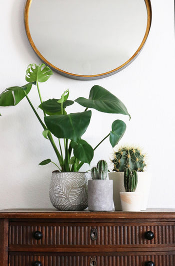 Various Plants on a vintage wooden sideboard and a round mirror Cacti Cactus Monstera Deliciosa Botanical Decoration Flower Pot Green Color Growth Home Home Interior Houseplant Indoors  Interior Design Leaf Leather Strap Plant Potted Plant Round Mirror Shelf Urban Jungle Vase Vintage Furniture Wall - Building Feature White Color Wood - Material
