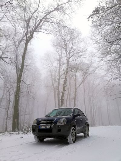 Let It snow EyeEmNewHere Naturelovers Nature Photography Nature_collection Hyundai Hyundai Tucson Car Weather Cold Temperature Snow Winter Environment Storm Fog Extreme Weather No People Snowing Tree Nature Outdoors Day Sky