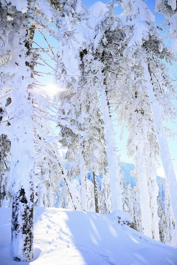 Snow covered trees on land