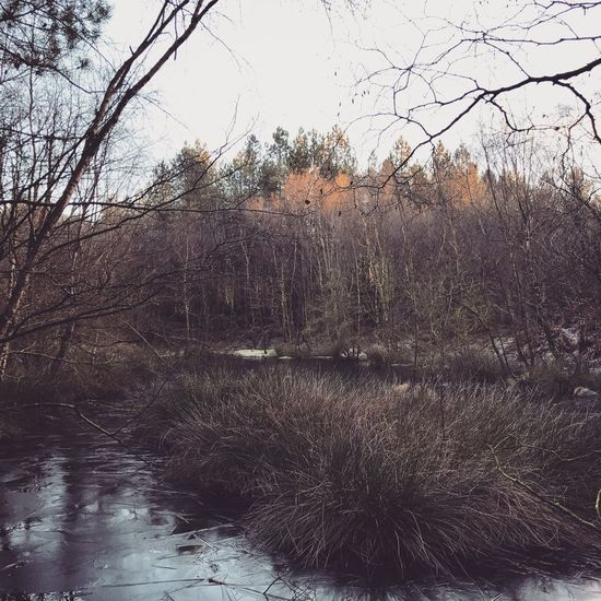 Cold day in Delamere, Tree Nature Bare Tree Tranquility Growth Water No People Outdoors Day Grass Branch Beauty In Nature Willow Tree Sky Photography Scenery Cold