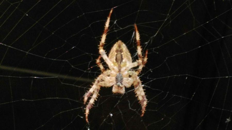 Spiderweb Spiders Spider Close-up Animal Themes Nature Garden Garden Photography