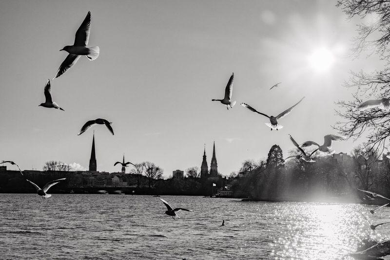 Farblose Alster😎 Leicacamera Leica CL Blackandwhite Alster Hamburg Seagull