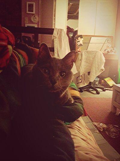 Wuv my kitty ❤