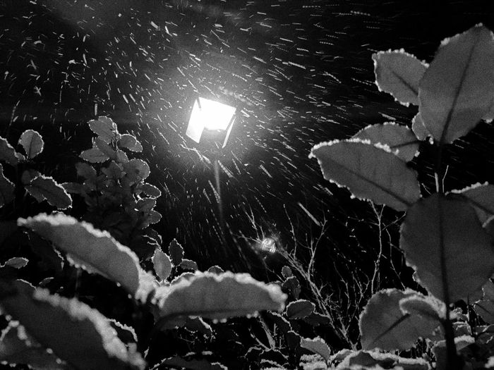 Snow falling last night against a period style lamp Snow Snow ❄ Snowing Snowy Weather WeatherPro: Your Perfect Weather Shot Weather Channel The Weather Channel Northampton Northamptonshire Northants Uk United Kingdom