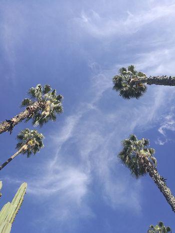Sky Marrakech Majorelle