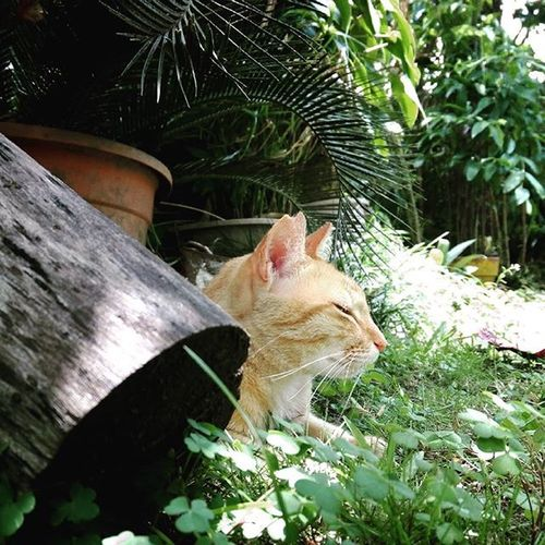 Meow Garden Philippines Photography Cats