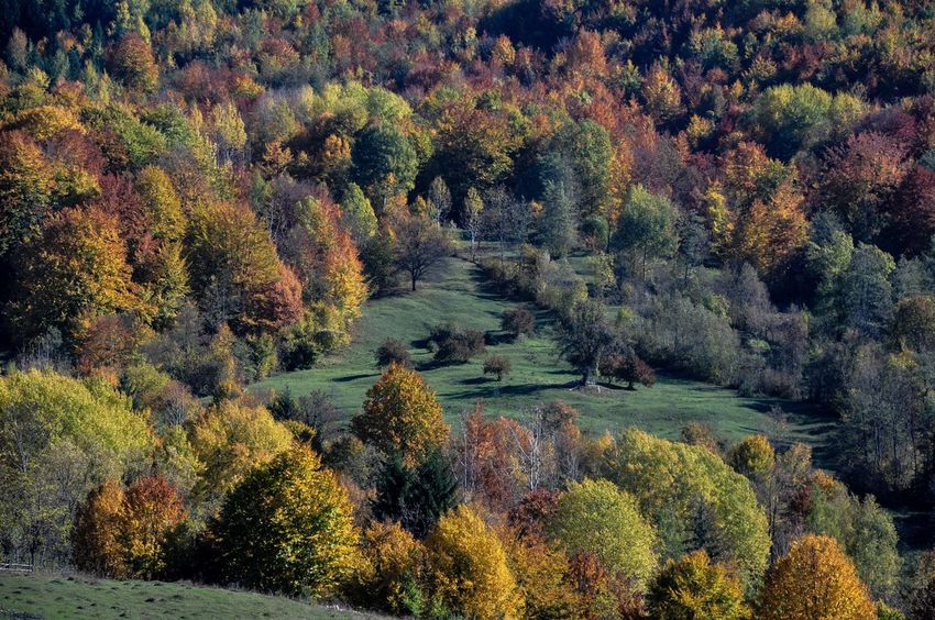 Autumn Collection Autumn Colors Autumn🍁🍁🍁 Foresthills Holidays Relaxing Time Sky_collection The Carpathian Hills Pastel Power
