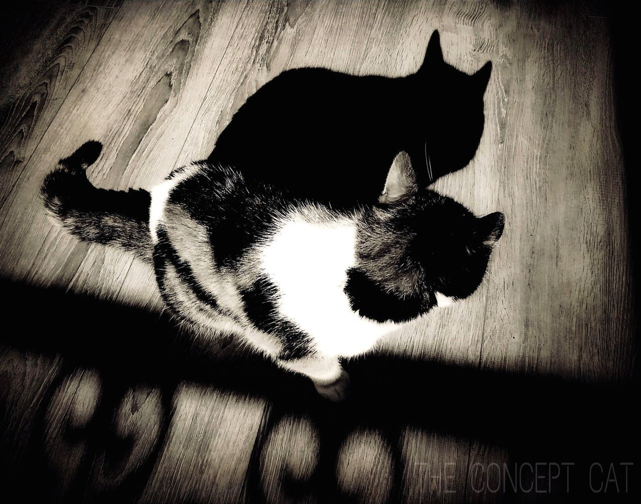 domestic cat, domestic animals, pets, cat, animal themes, one animal, feline, indoors, mammal, high angle view, no people, relaxation, full length, lying down, day, close-up