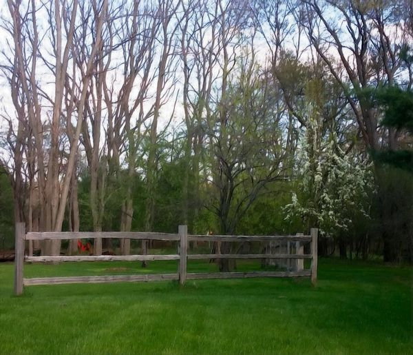 Split Rail Fence Green Grass And Trees Beautiful Day