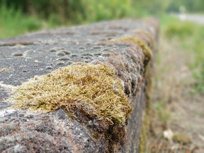 Close-up Grass