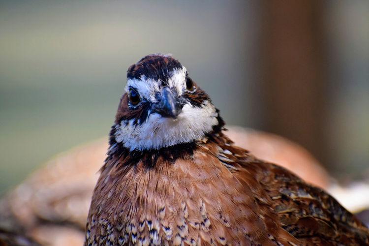 Close-up of a bird looking