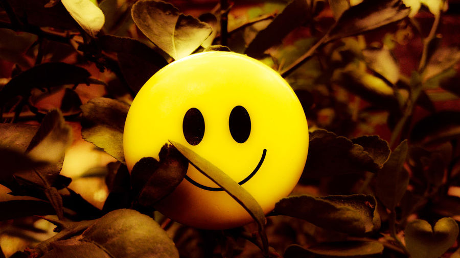 Smile Golden Yellow Nature Smile In Nature Smile ✌ Smile❤ Smilerforever Smiles To My Haters Smiles :) Smile Nature Cute Follow Famous EyeEmNewHere