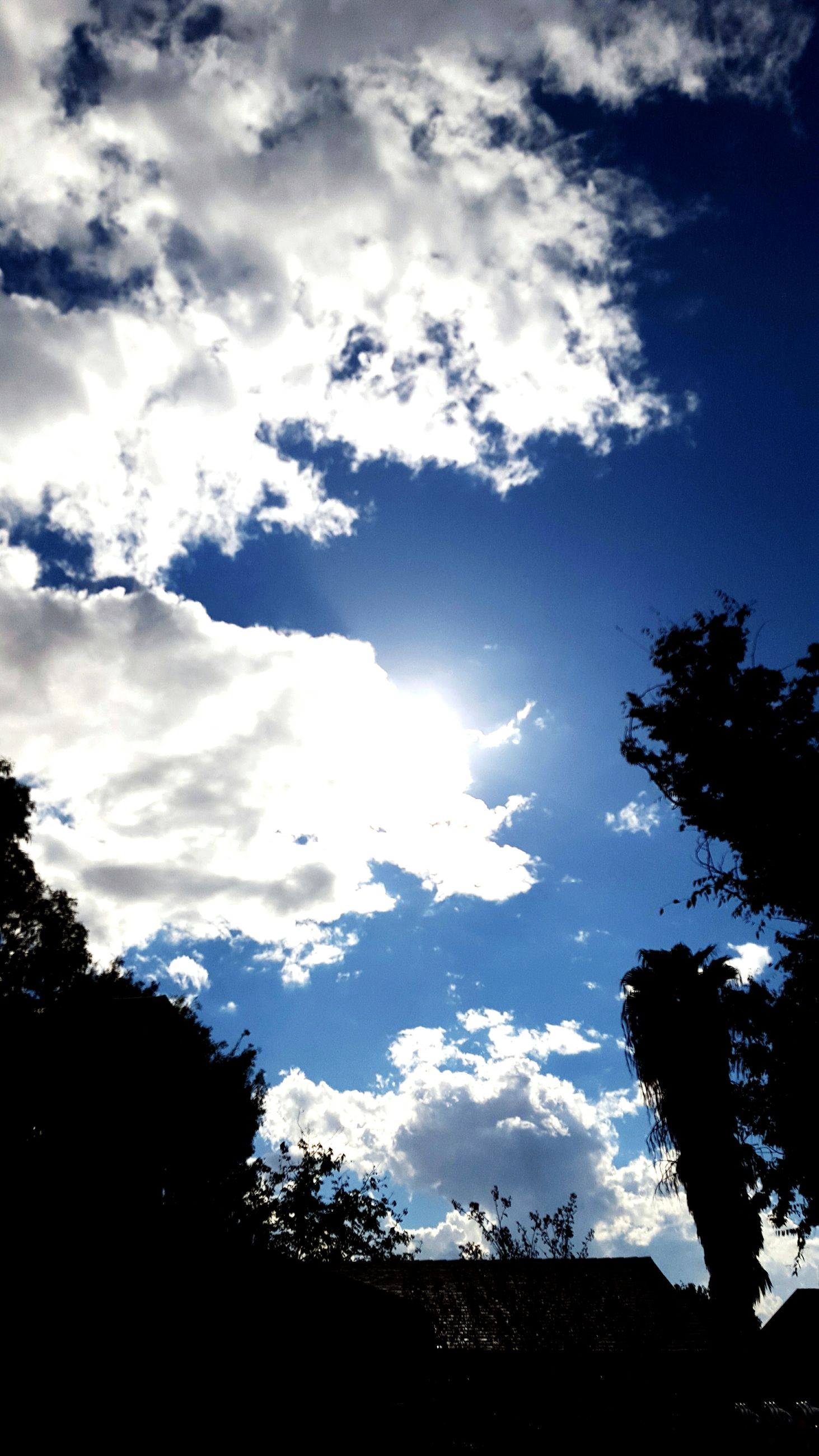 silhouette, sky, tree, low angle view, cloud - sky, tranquility, beauty in nature, scenics, nature, cloud, tranquil scene, blue, cloudy, high section, growth, outdoors, no people, idyllic, day, sunlight