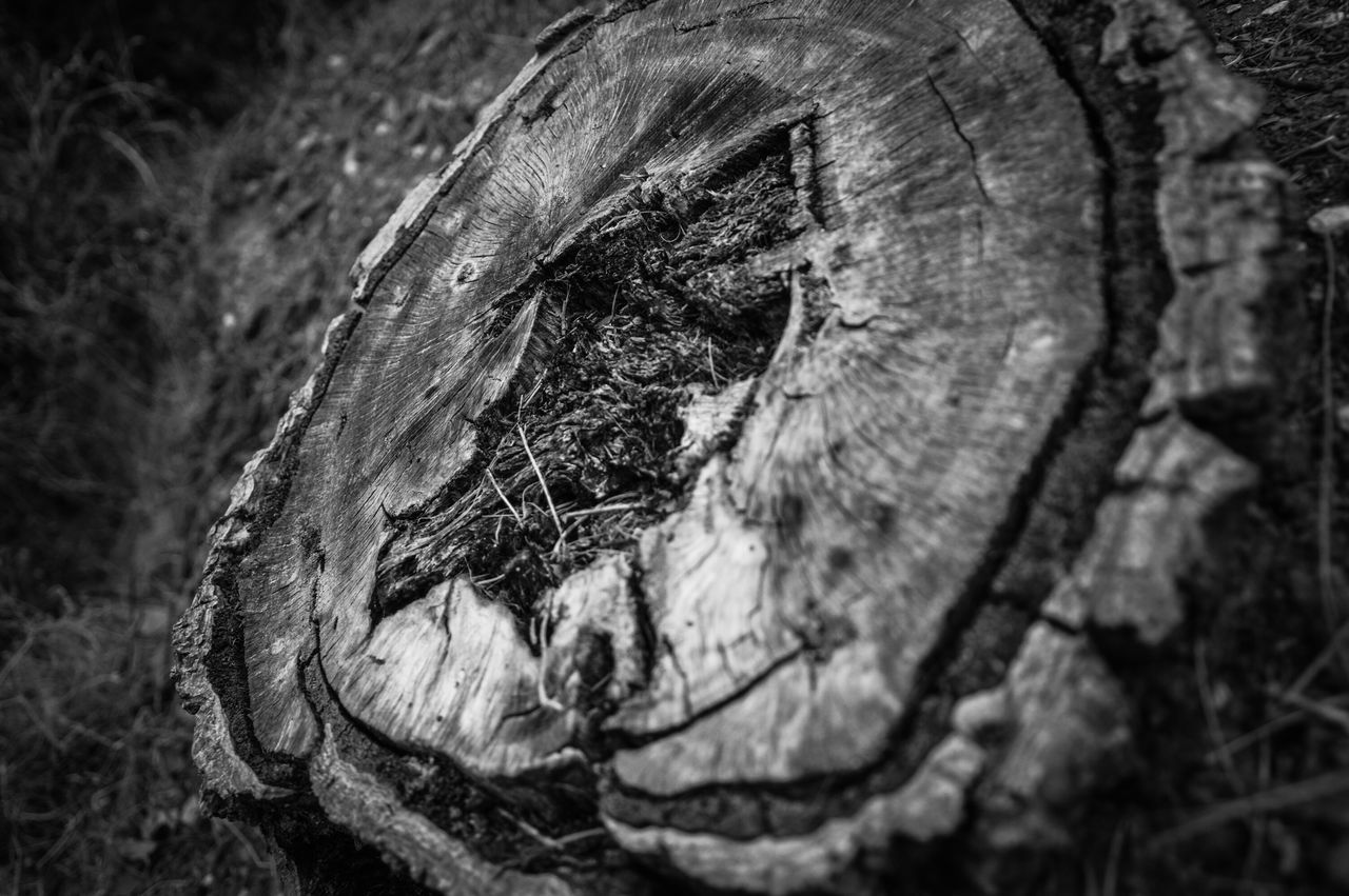 close-up, no people, outdoors, tree trunk, day, nature, textured, tree, animal themes