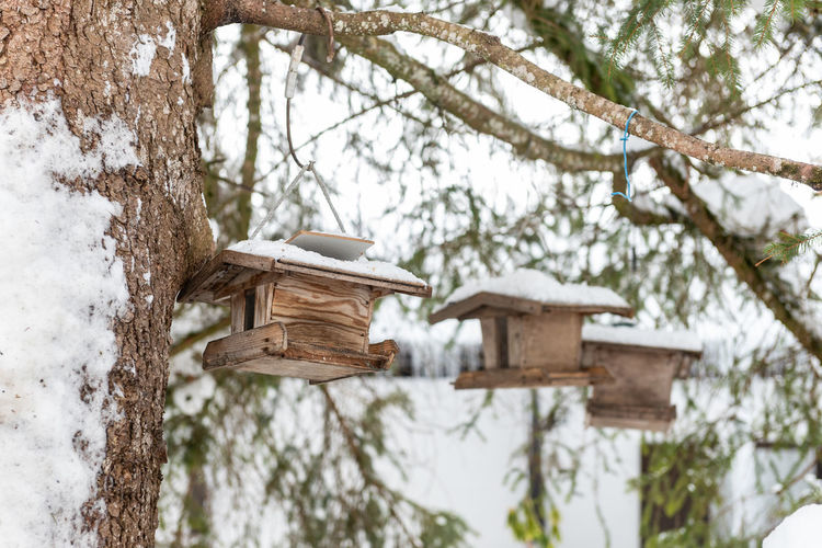 Homemade wooden bird's feeder on the tree in winter, under snow.