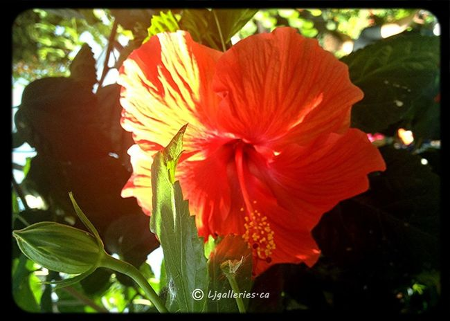 All_shots Onlyflowers Flowers Eye4photography