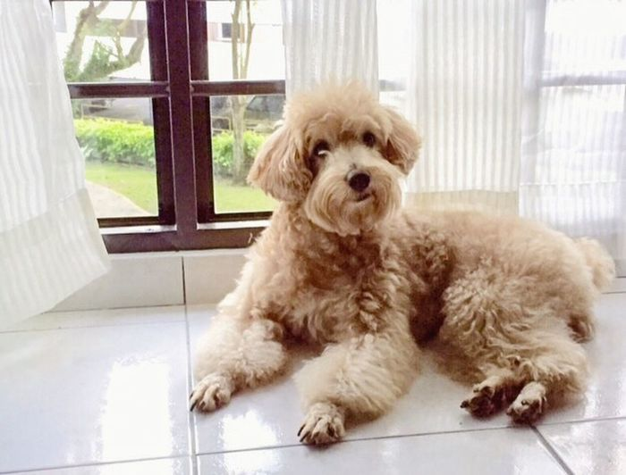 My Dog Mickey