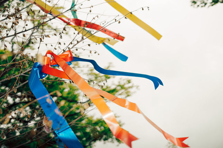 Wish tree with colored ribbons
