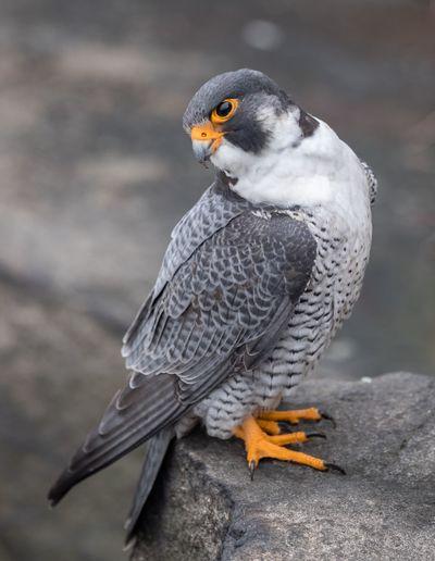 Close-up of bird looking away perching on rock