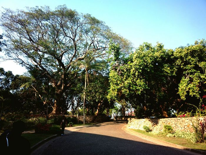 Tree And Sky Green Green Green!  Ilocosnorte Marcos Philippines Mobilephotography Eyeem Philippines