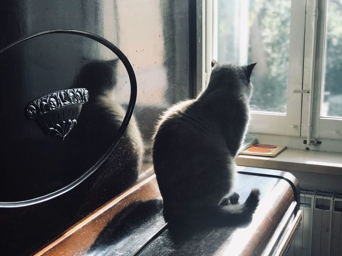 Looking Away Window Piano Moments Piano Domestic Cat Window Cat Feline Pets One Animal Domestic Domestic Animals Animal Themes Home Interior 17.62°