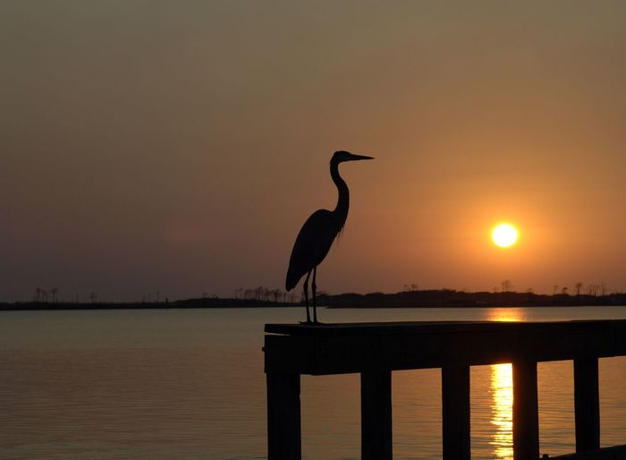 Animals In The Wild Bird Blue Heron Destin Beach Florida Florida Sea Bi Nature River Saltwater Bir Saltwater Bird Sea Birds Standing Water Sundown Sunset Water Waterfront Wildlife