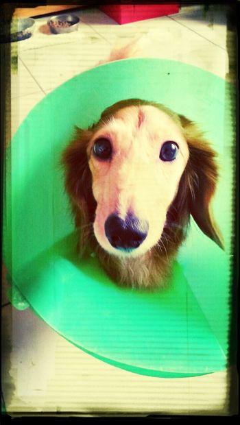 Dog Hello World