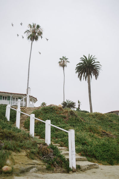 Stairs leading out of beach. California Southern California Stairs Architecture Beach Beauty In Nature Building Exterior Built Structure Clear Sky Day Grass Growth Nature No People Outdoors Palm Tree Sky Tree