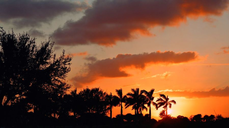 Silhouette palm trees against dramatic sky during sunset