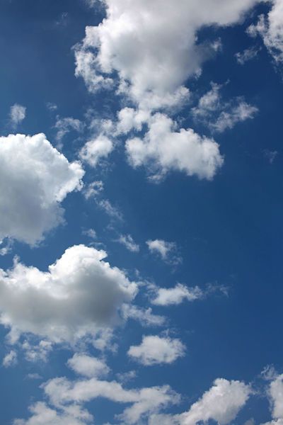 Sunny blue sky with fluffy clouds Cloud - Sky Sky Low Angle View Beauty In Nature Tranquility Scenics - Nature Nature White Color Day No People Blue Backgrounds Tranquil Scene Outdoors Idyllic Cloudscape Full Frame Sunlight Softness Fluffy Meteorology Height
