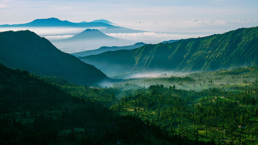 Bromo Forest Green Color Growing Growth Idyllic Landscape Lush Foliage Mountain National Park No People Non-urban Scene Plant Remote Scenics Tranquility