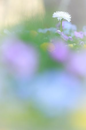 Bokeh Flowers EyeEm Nature Lover Macro ほわわん(*´ρ`*)