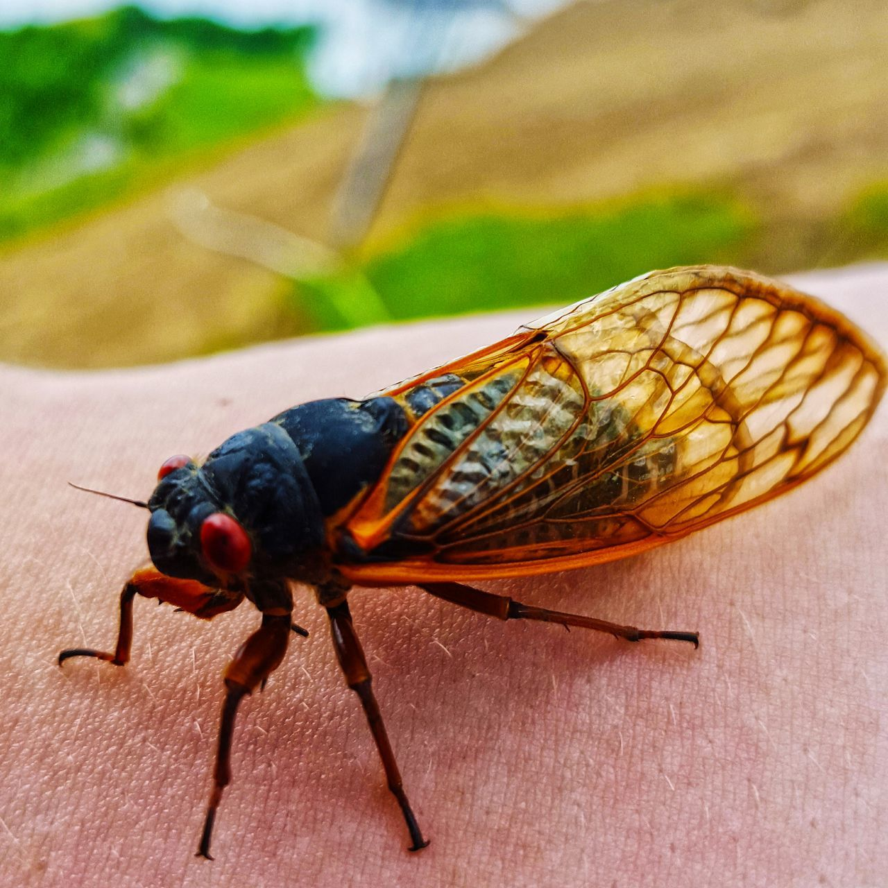 invertebrate, insect, animal themes, animal, one animal, animals in the wild, animal wildlife, close-up, focus on foreground, no people, day, animal body part, animal wing, outdoors, nature, zoology, wood - material, full length, macro, animal antenna