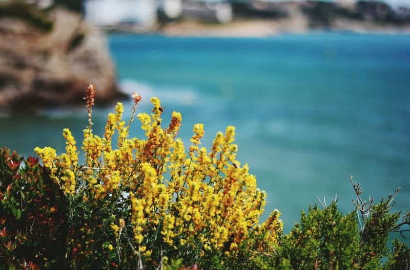 Flower Nature Plant Outdoors No People Day Water Landscape Beauty In Nature Scenics Sea Tree Sky Close-up Yellow Flower Yellow