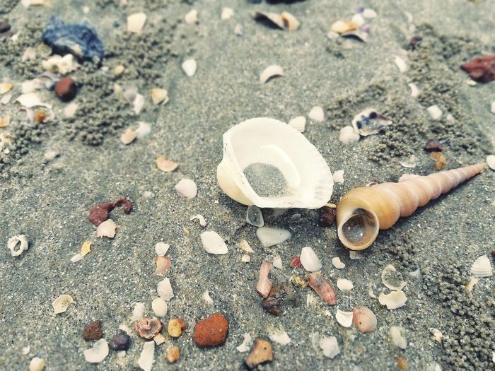 Together until death Friendship Loving Lastforever Untildeath Beach Sand Close-up Seashell Animal Shell
