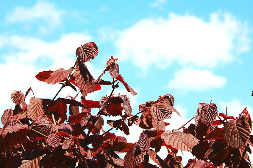 Beautiful Nature Colors Of Nature Red Leaves Red And Blue Nature Photography Blue Sky Nature On Your Doorstep