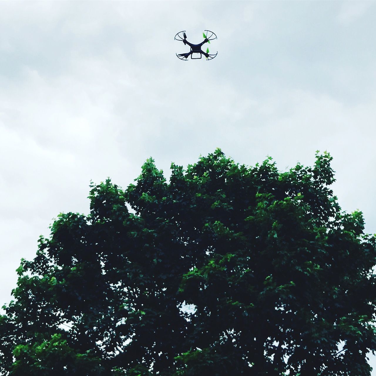 low angle view, tree, sky, cloud - sky, flying, day, no people, mid-air, outdoors, nature, technology, airplane, beauty in nature