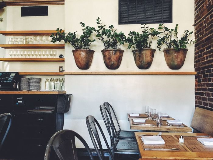 Empty chairs and tables with potted plants on wall at restaurant