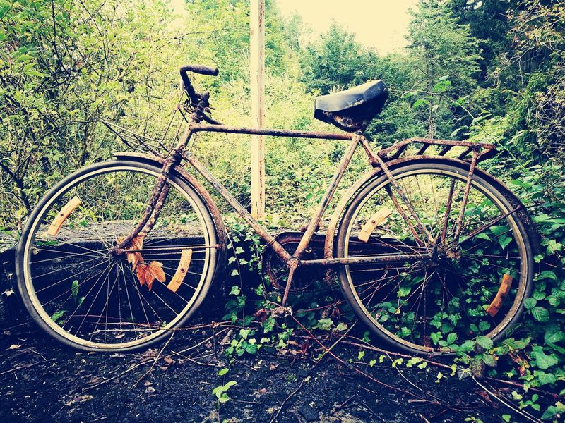 Bicycle Transportation Mode Of Transport Day Land Vehicle Outdoors No People Bicycle Rack Stationary Abandonned House Abandoned Urbex Eyeem Abandonned Building Urbexexploration Desolate Scene Desolatecollection Urbexphotography AbandonedAbandoned Places Manoir Aux Statues Urbex Sport Urbex Abandoned