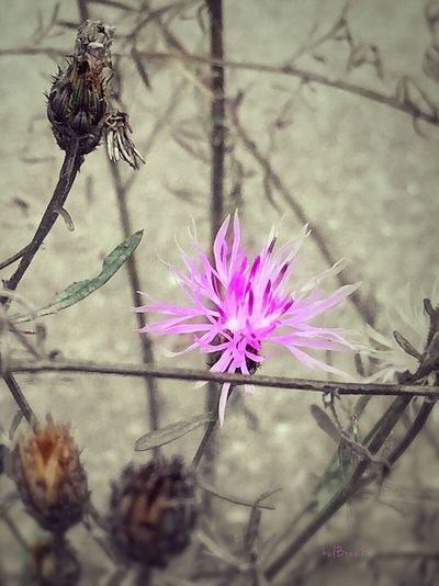 Fancy Wildflower Photography Pink Flower Abstracts In Nature Flower Nature Fragility No People Flower Head Beauty In Nature