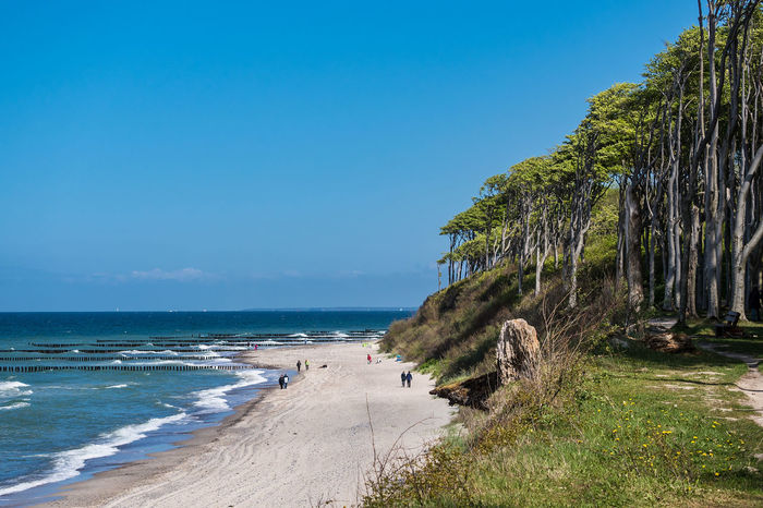 Coastal forest in Nienhagen, Germany. Beach Beauty In Nature Coast Day Forest Nature Nienhagen Germany No People Outdoors Scenics Sea Shore Sky Tourism Travel Destinations Tree Vacation Water Waves