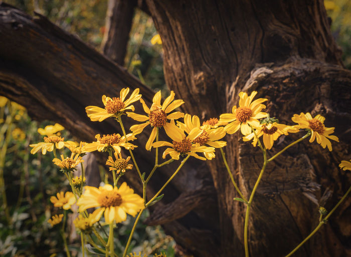 Close-up of yellow wildflowers against deadwood